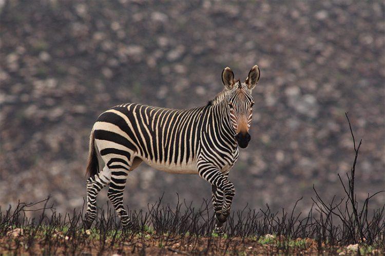 Swartberg Game Reserve