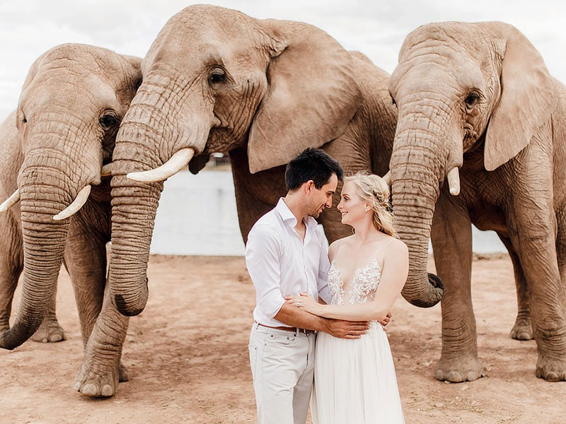Couple with Elephants