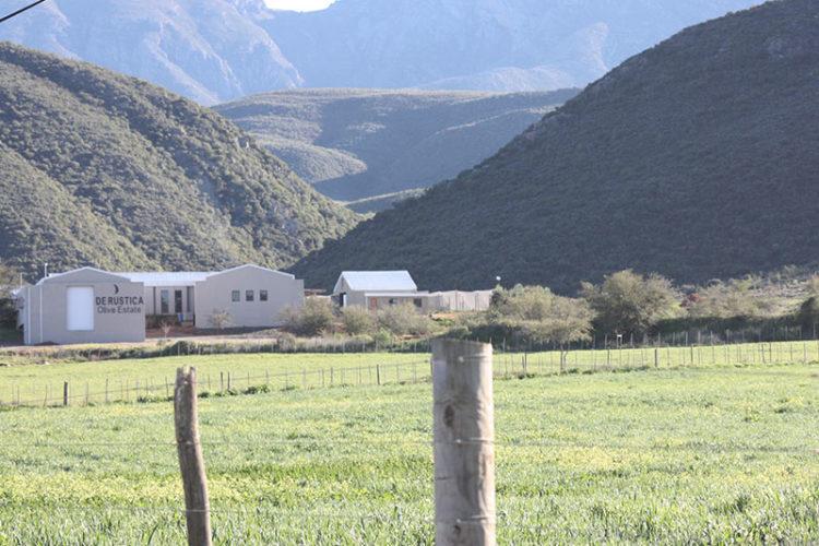 De Rustica Olive Estate